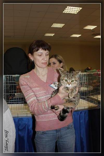 Выставка кошек