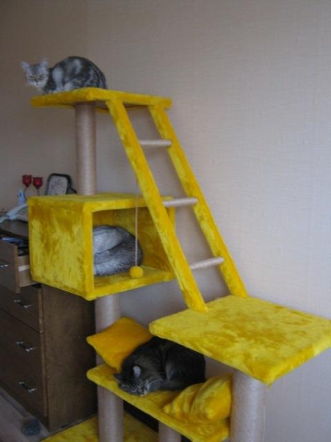 Игровой центр для кошек своими руками 30