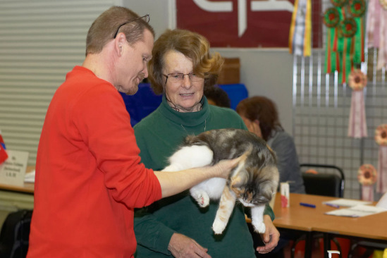 Выставка кошек 16-17 января Москва FIFe