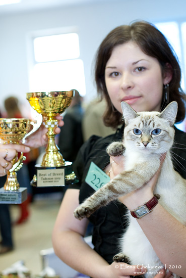 Выставка кошек Новосибирск
