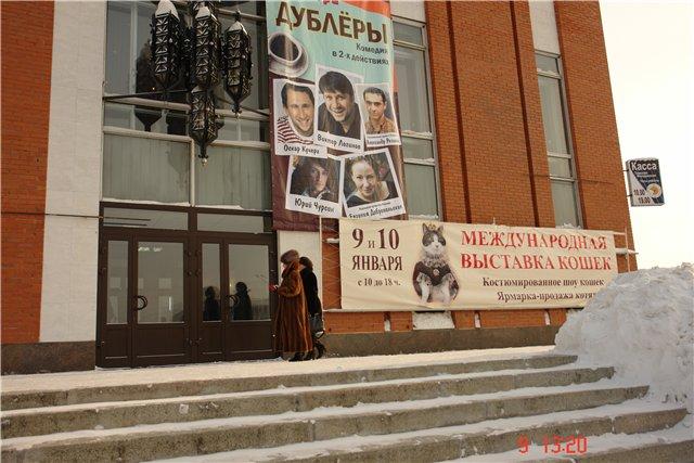 Выставка кошек 9-10 января Томск МФА