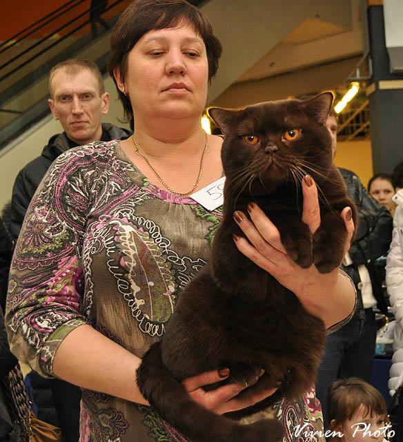Фото с выставки кошек