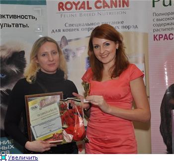 Выставка кошек в Минске
